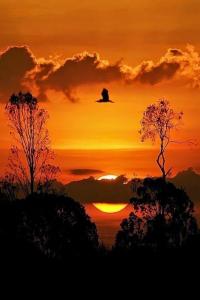 Imagen extraída de Brasileira Curiosa (en Pinterest)